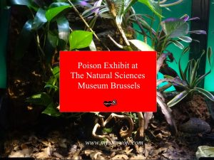 Poison-Exhibit-at-The-Natural-Sciences-Museum-Brussel