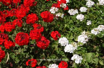 roses to overcome wrong choices