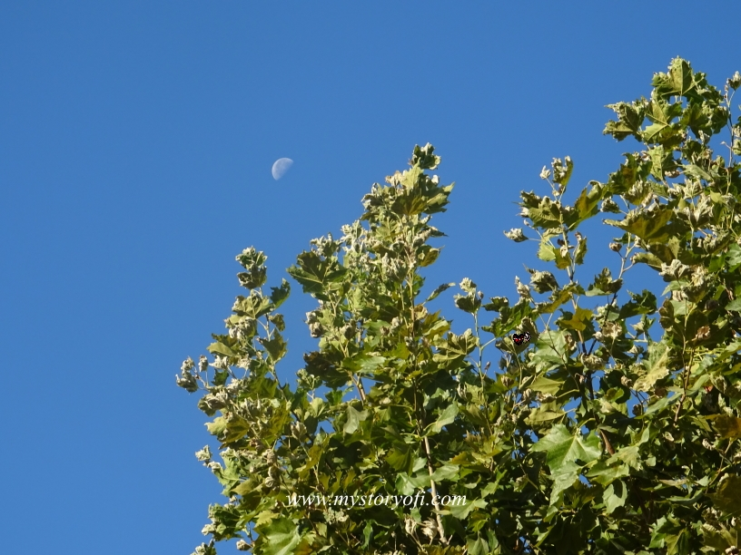 The moon in Paris, wonder about self-handicapping