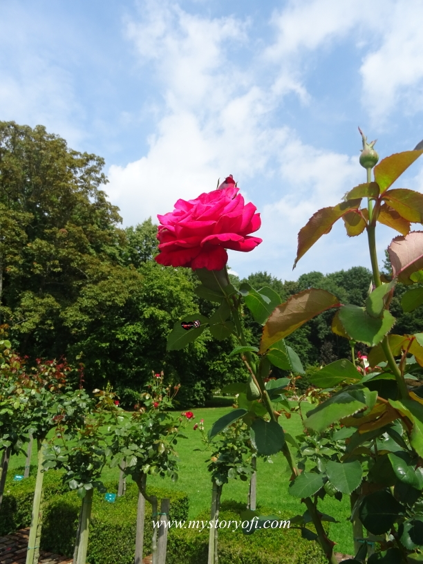 Stop-and-smell-the-roses-while-you-have-time